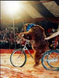 Urso numa bicicleta